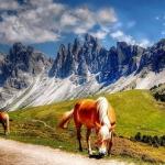 Scopri la bellezza delle Dolomiti: alloggia nel Residence Casa Canazei