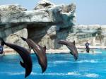 Vacanze a Riccione e vicino ai parchi divertimento